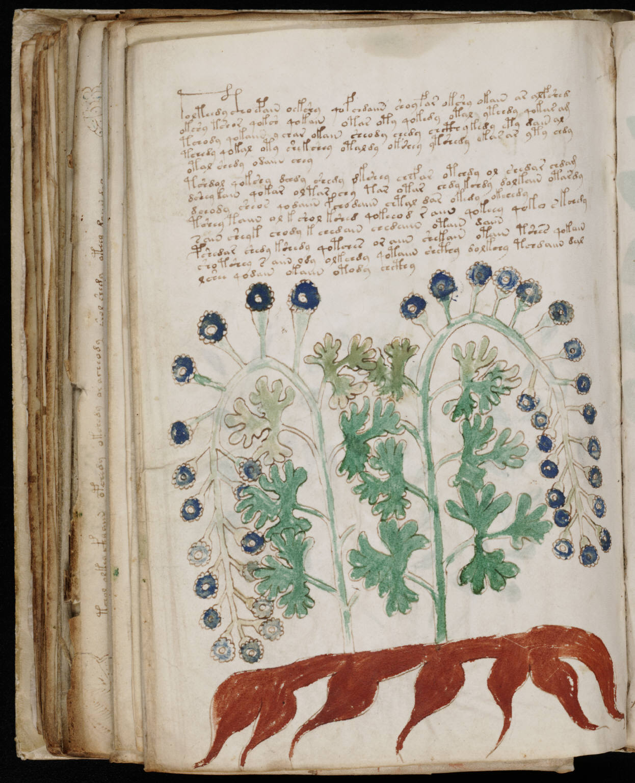 voynich manuscript full pdf download