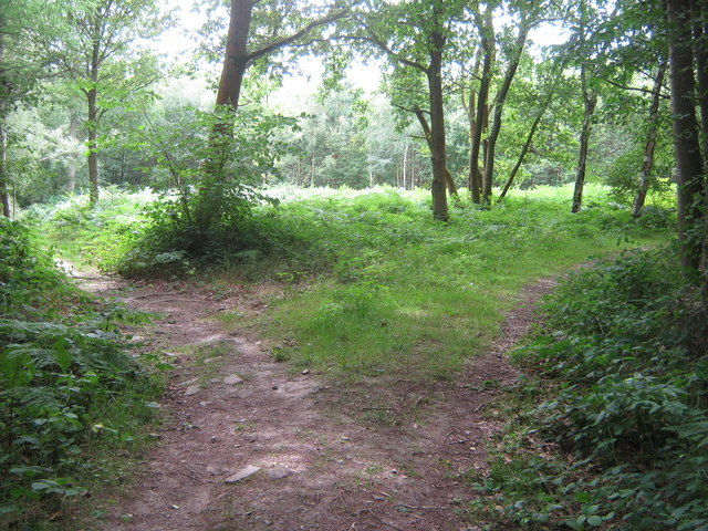Which path is the Tunbridge Wells Circular ^ - geograph.org.uk - 1411914