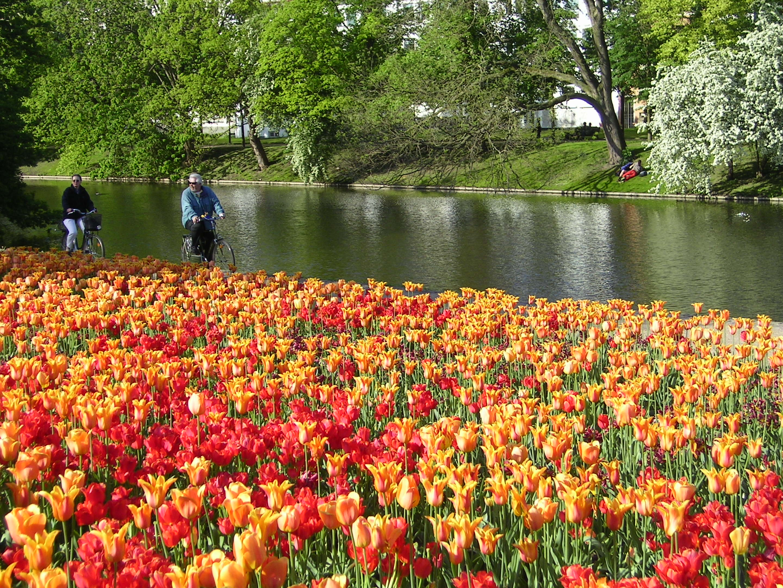 File:Windmill Rose Garden, Bremen 02.JPG