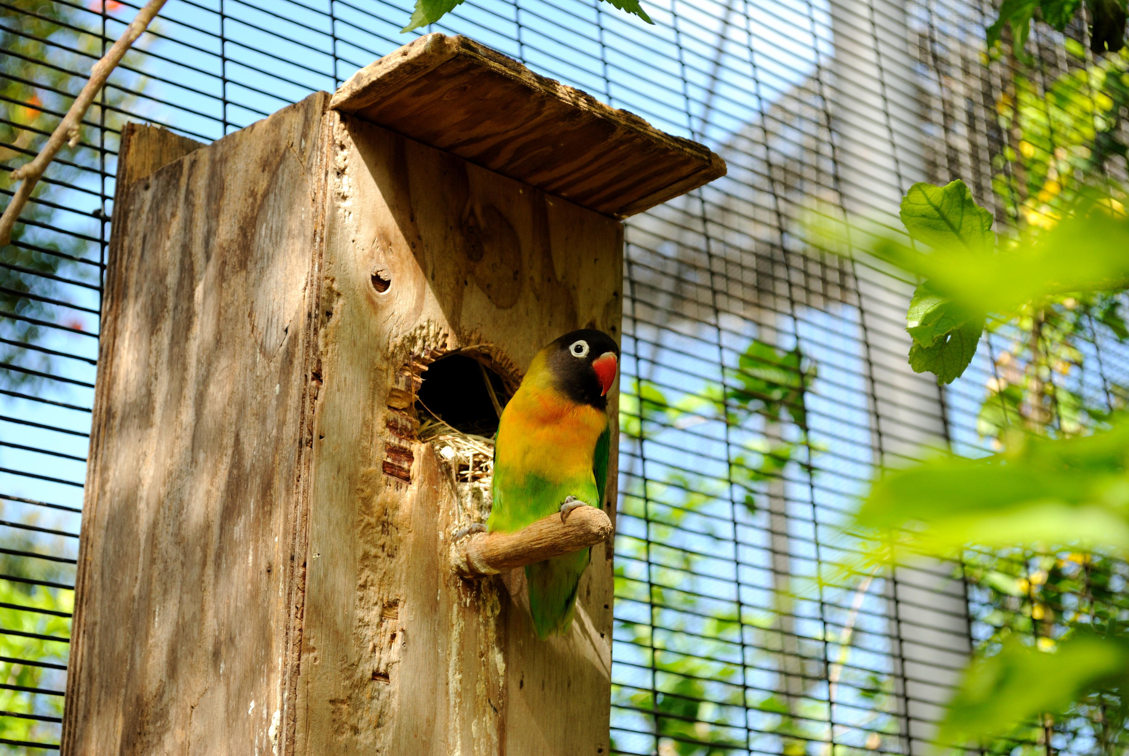 Домик для попугаев неразлучников своими руками6