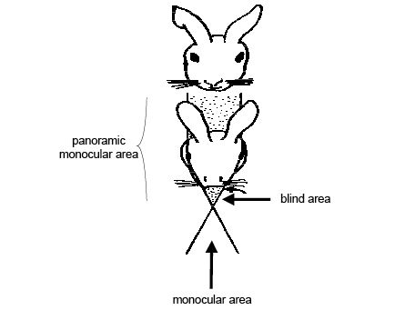 pictures of animals. area of binocular vision
