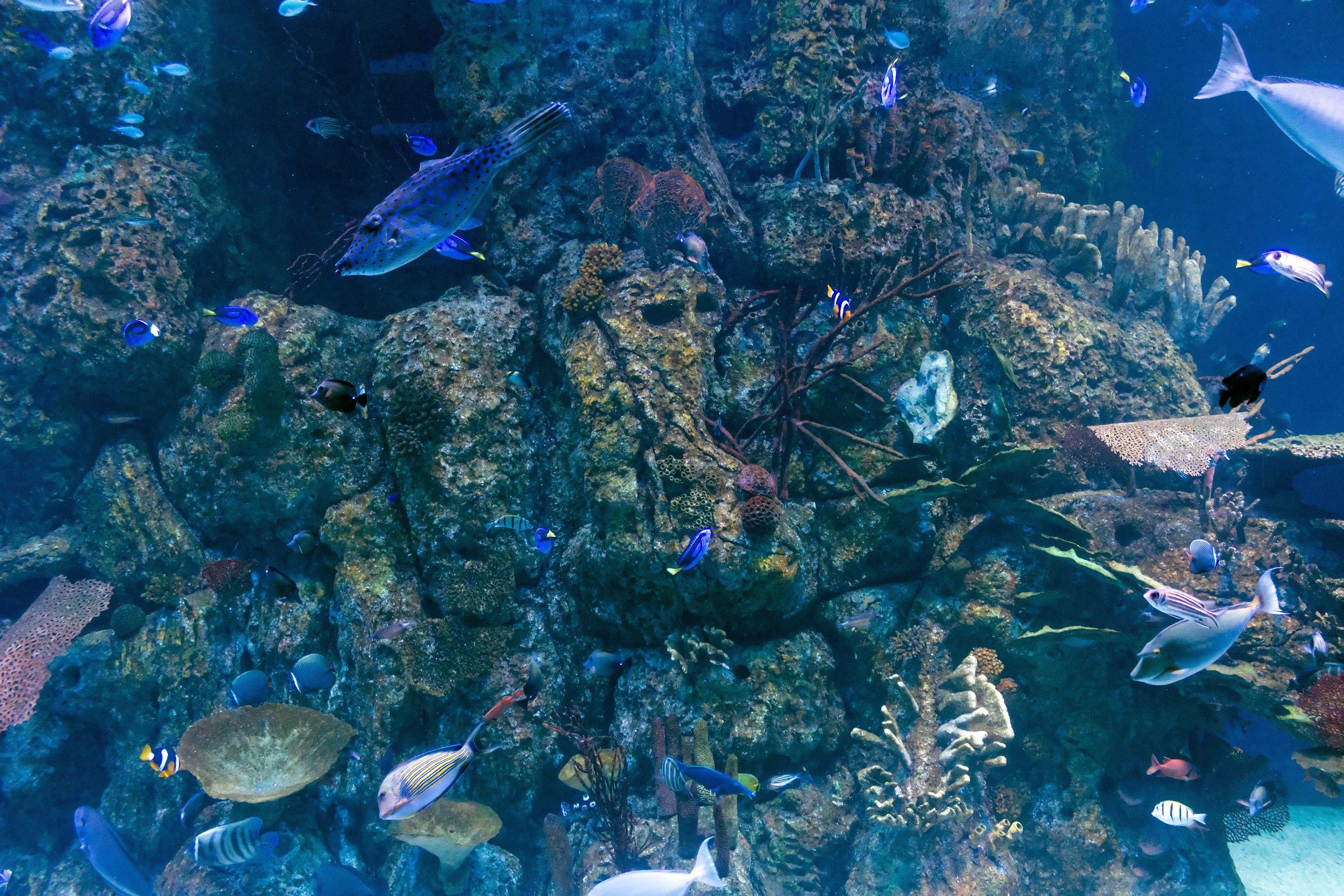 file assorted fish at jakarta aquarium neo soho jakarta 2018 06 28