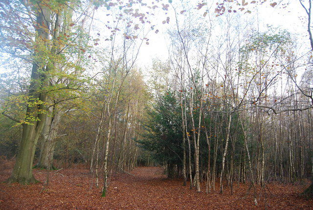 Autumn in Five Hundred Acre Wood - geograph.org.uk - 1584983