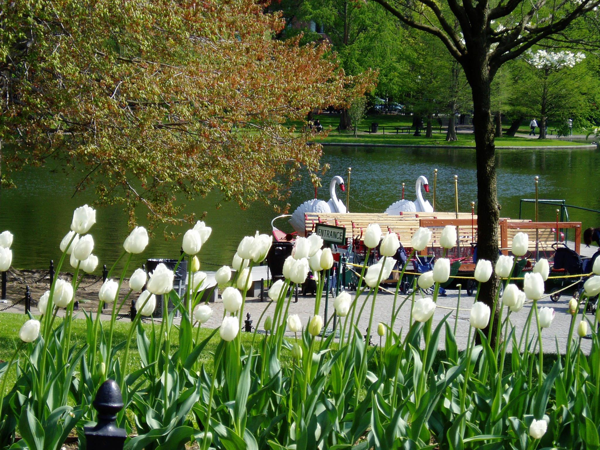 File Boston Public Garden Jpg