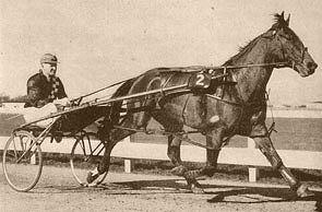 Caduceus (horse) New Zealand Standardbred racehorse