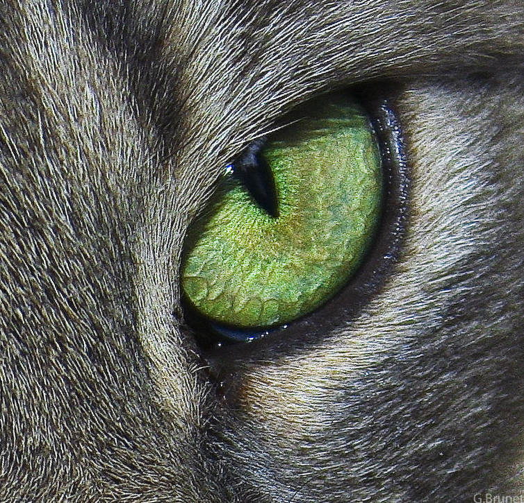 Cat S Eye Random Roles Site Avclub Com