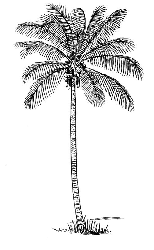 File:Coco (PSF).jpg - Wikimedia Commons