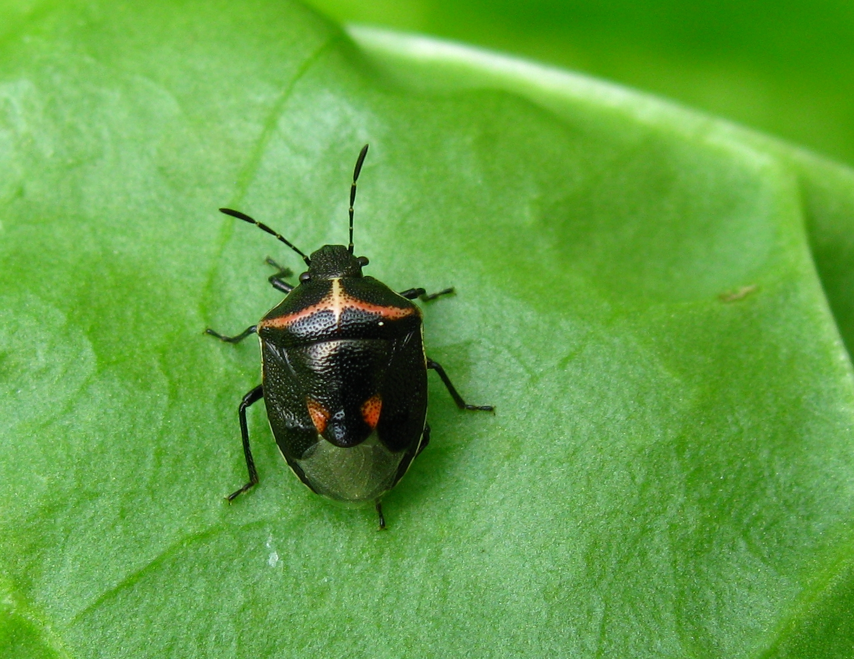 Alberta Bed Bug Dogs