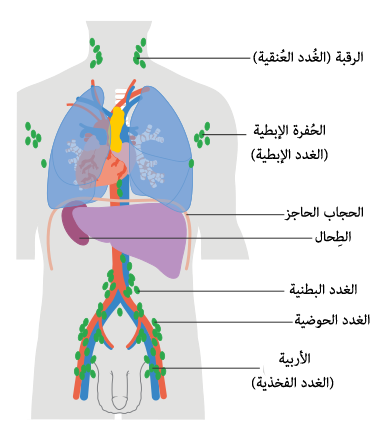 Filediagram Showing The Lymph Nodes Lymphoma Most Commonly Develops