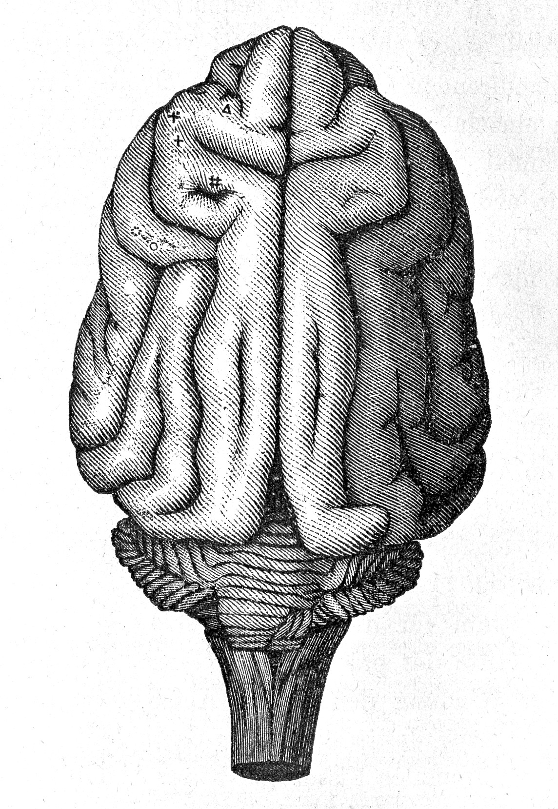 File:E. Hitzig and G. Fritsch, Brain of a monkey, 19thC. Wellcome ...