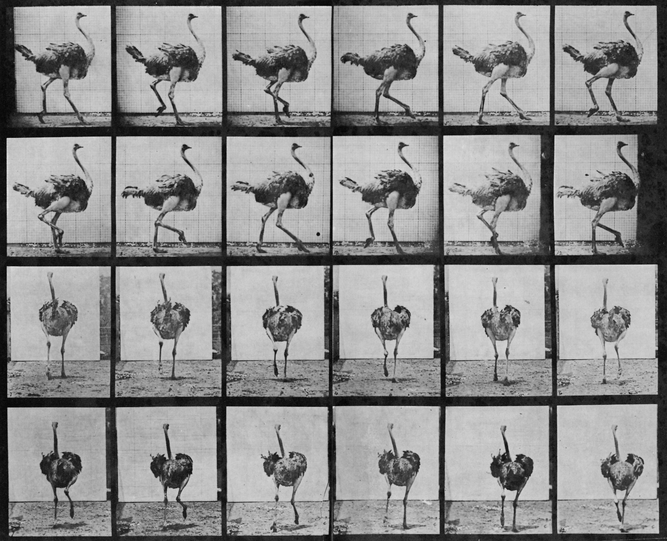 Eadweard Muybridge Animal And Human Locomotion on Life Cycle Flip Book