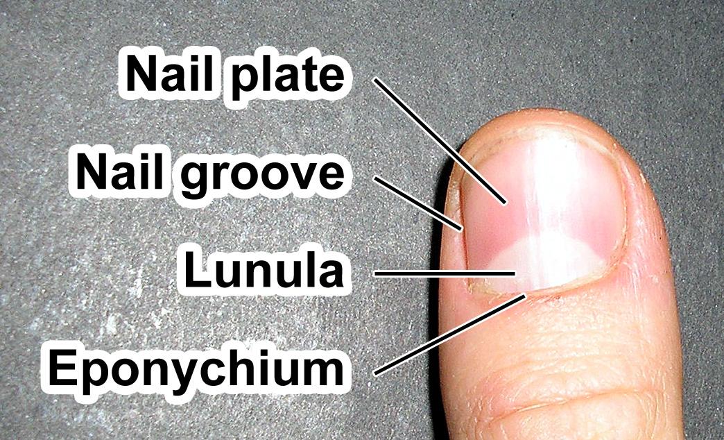 What a nail