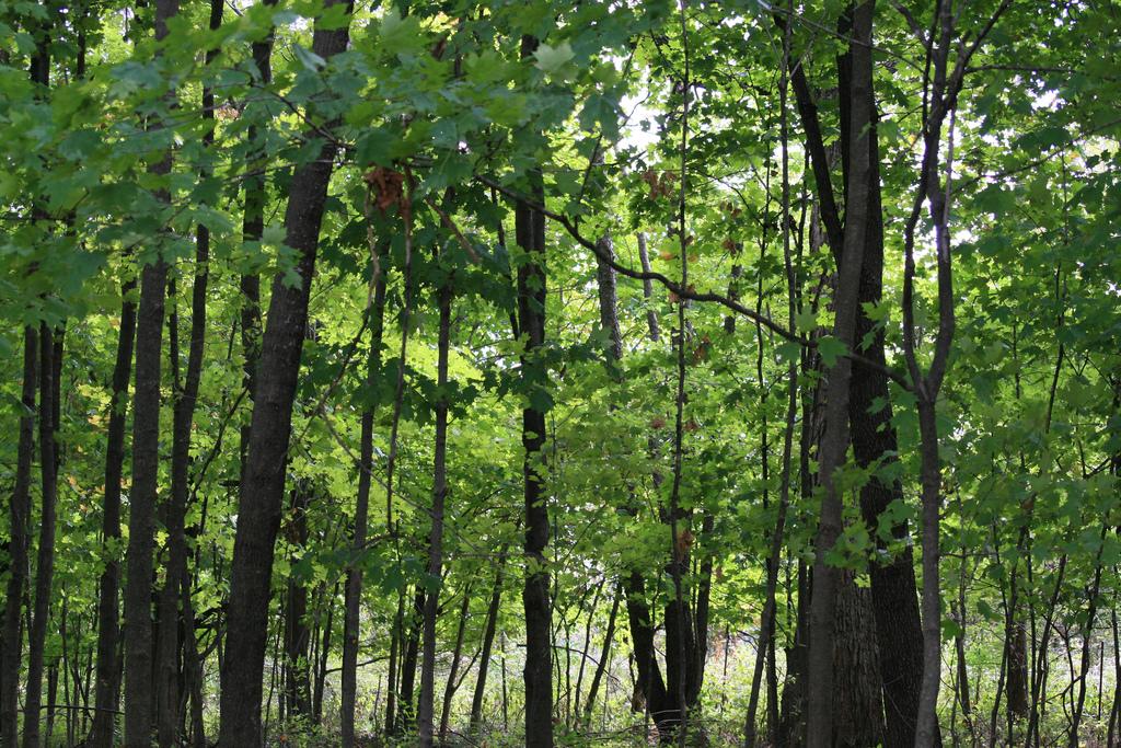 Funks Grove Nature Center Murder
