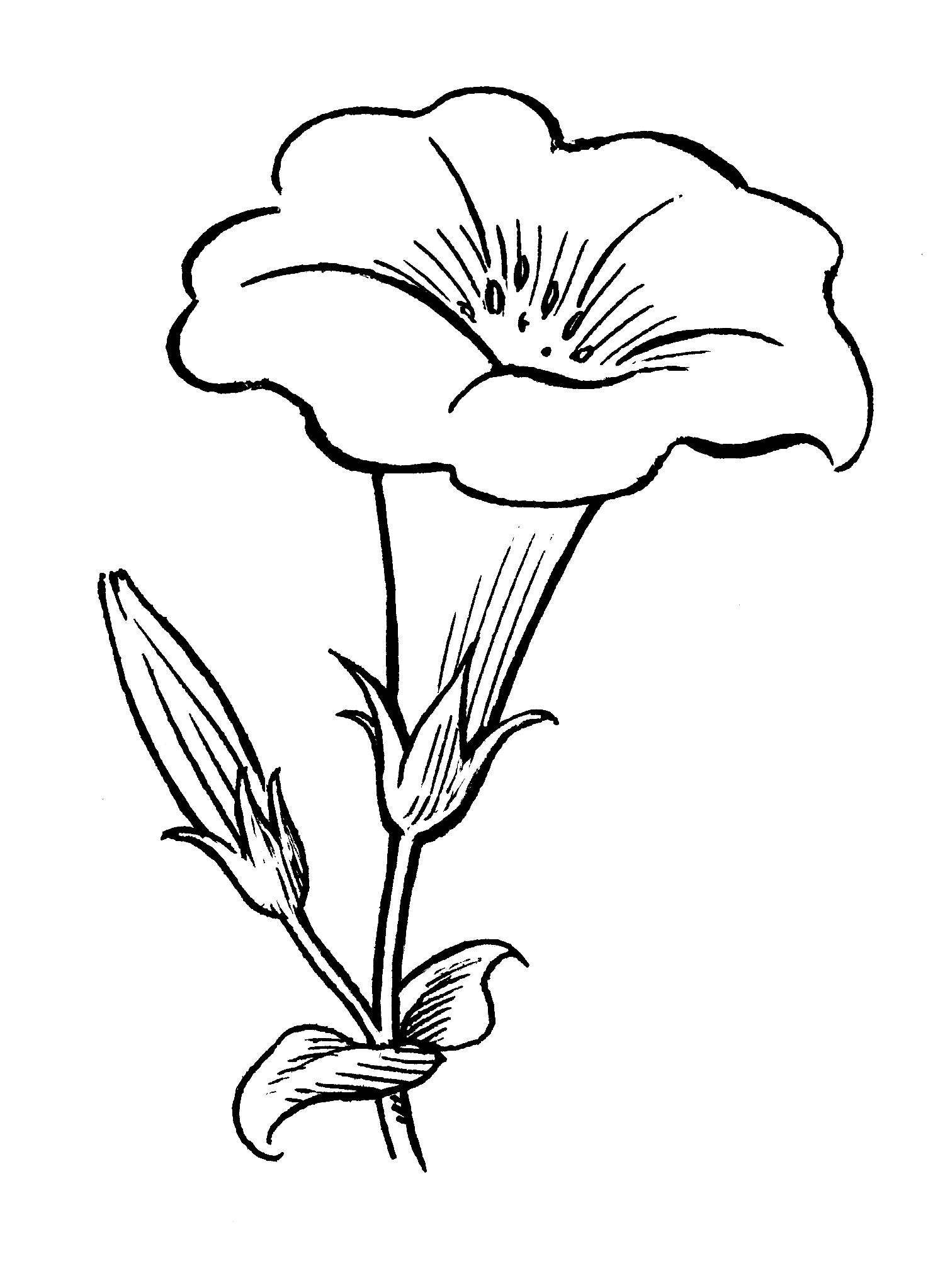 Plantas Para Decorar Jardines Peque Ef Bf Bdos