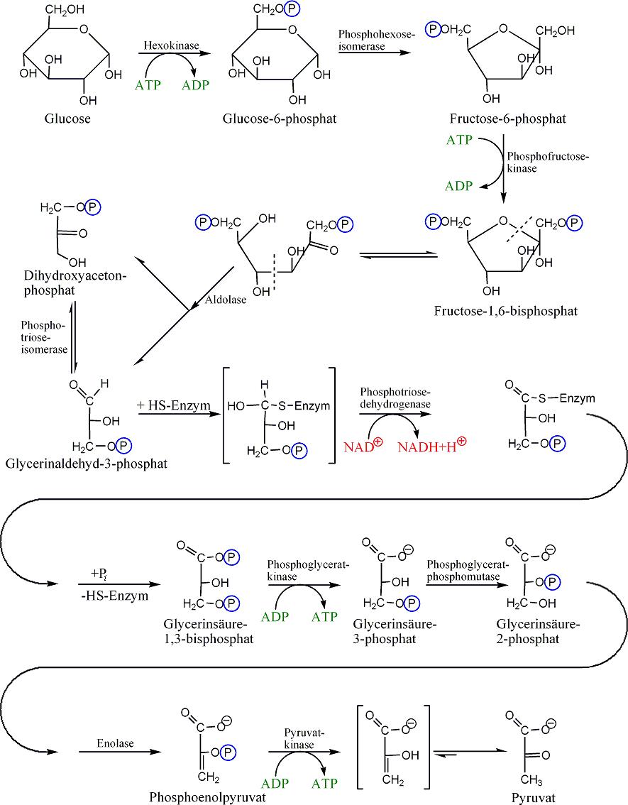 sustancias anabolicas