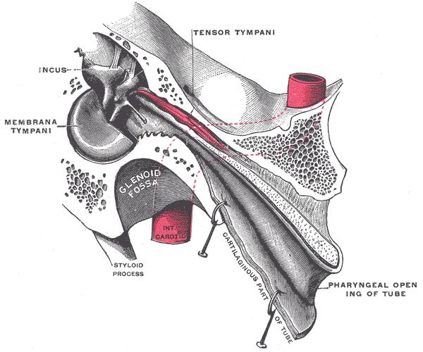 Imaging of Nasopharyngeal Carcinoma  Chan  Journal of