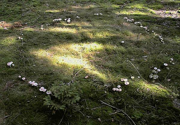 Les ronds de sorcières Hexenring-2