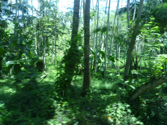 Hutan Wikipedia Bahasa Indonesia Ensiklopedia Bebas