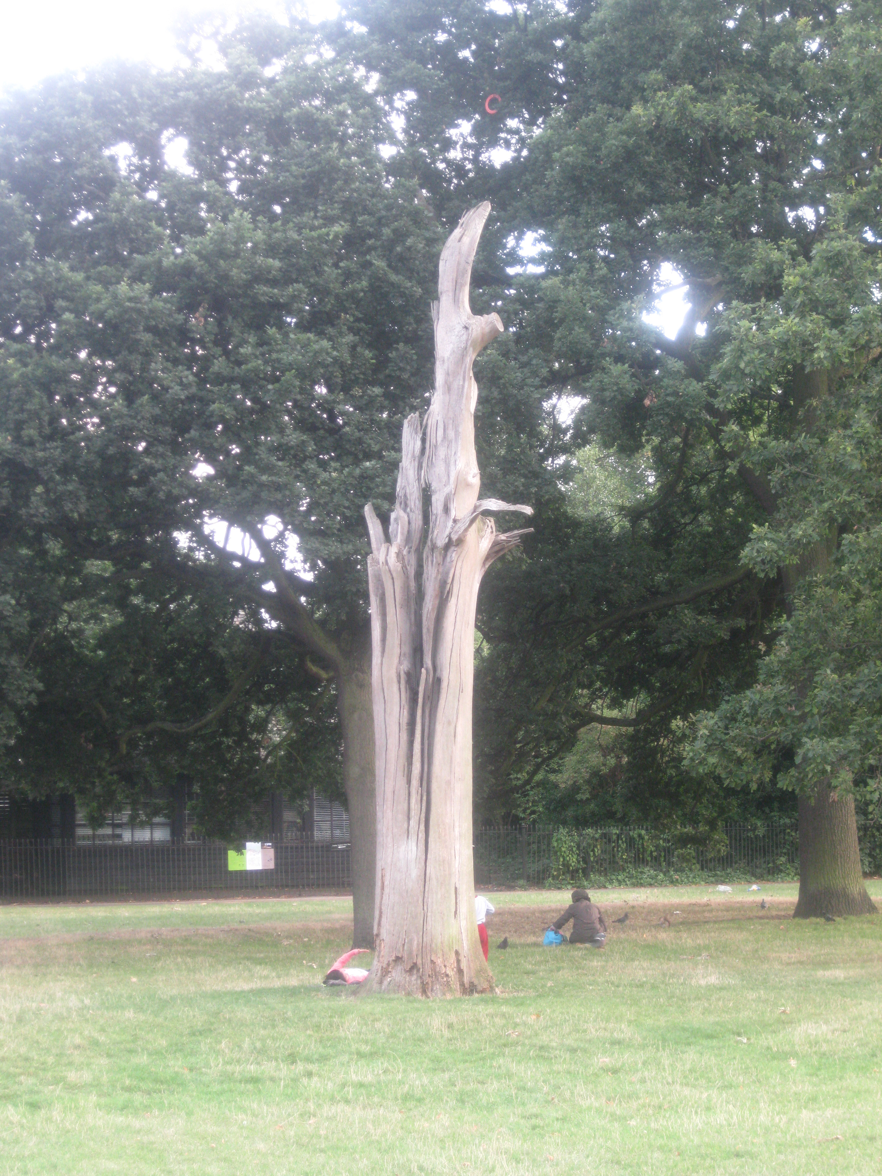 the lightning tree deutsch