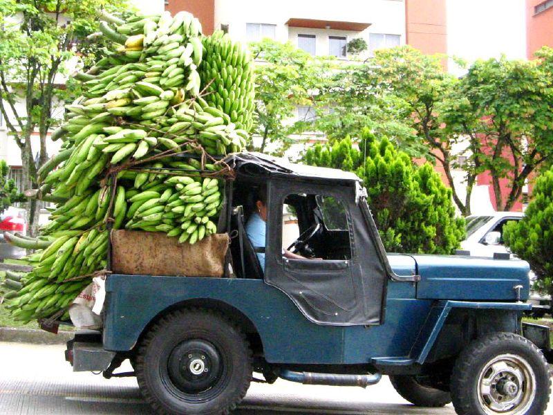 Taking Bananas to Market, Bogota Columbia