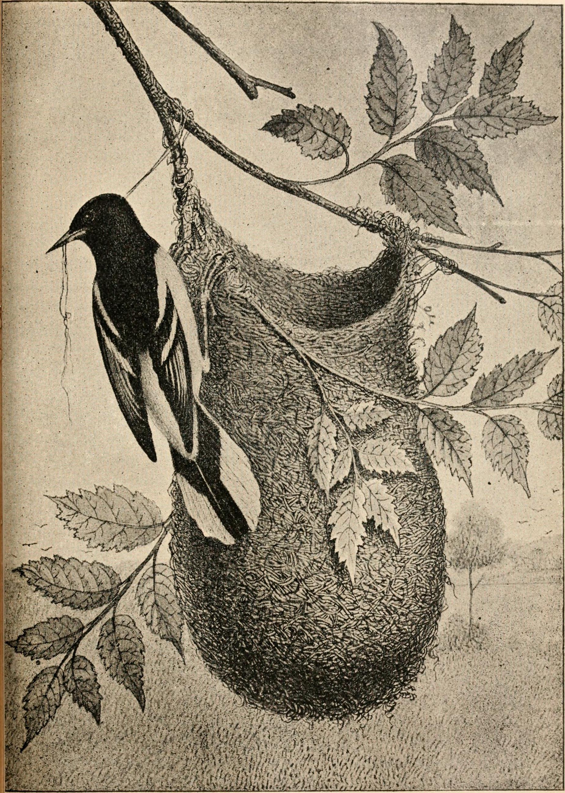 american birds photos