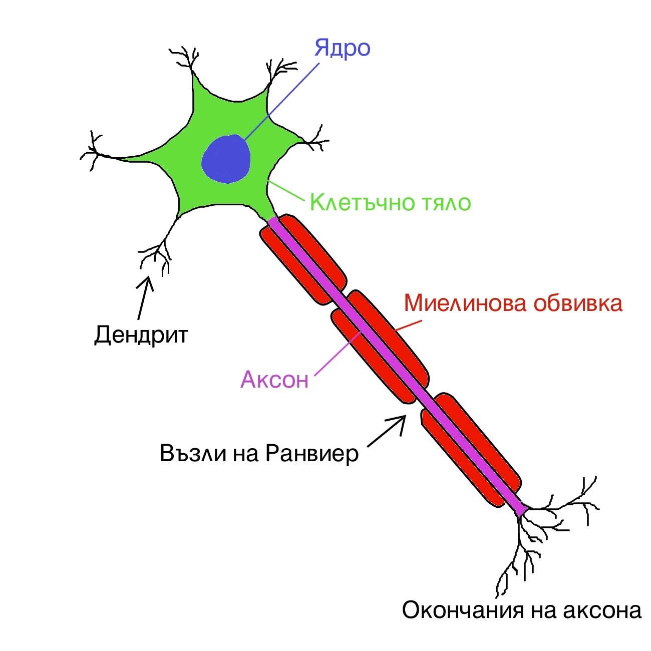 Cipro tendonitis  can antibiotics ruin tendons?