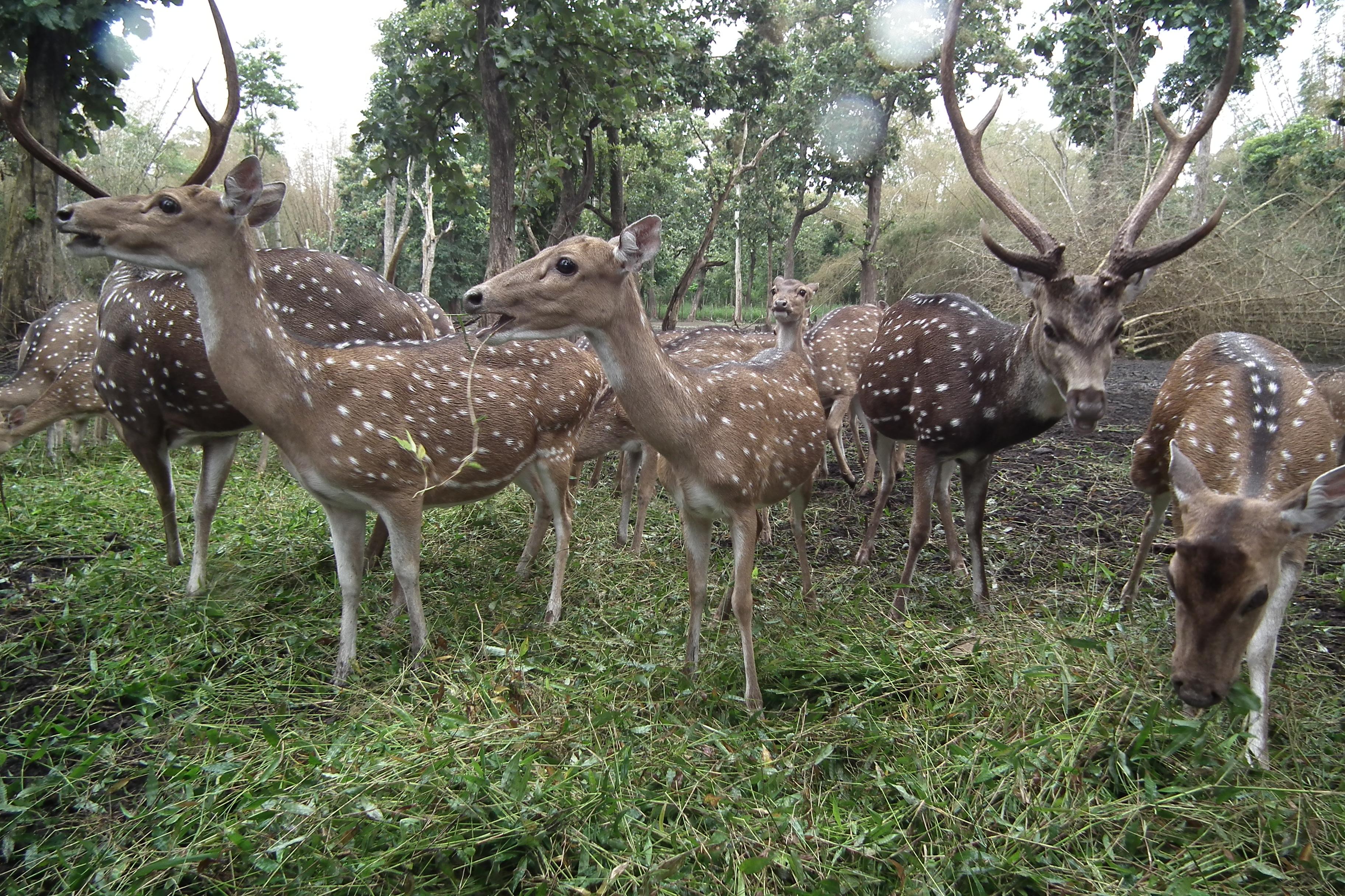 Deer park of Cauvery Nisargadhama
