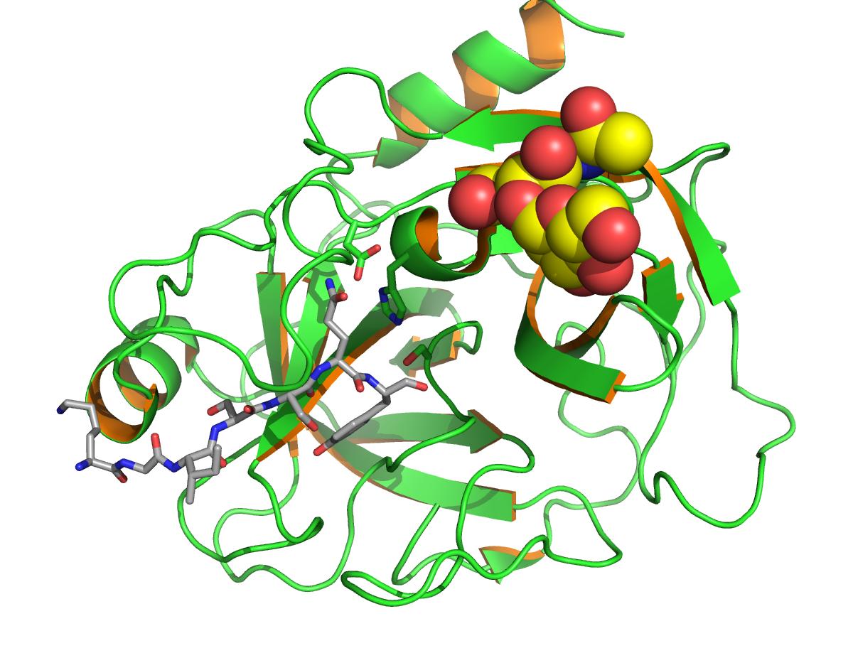 prostate-specific antigen - wikipedia