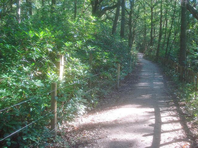 Public Bridleway through High Park Wood - geograph.org.uk - 1579683