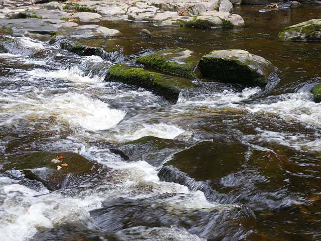 River Allen at Allen Banks - geograph.org.uk - 1535698