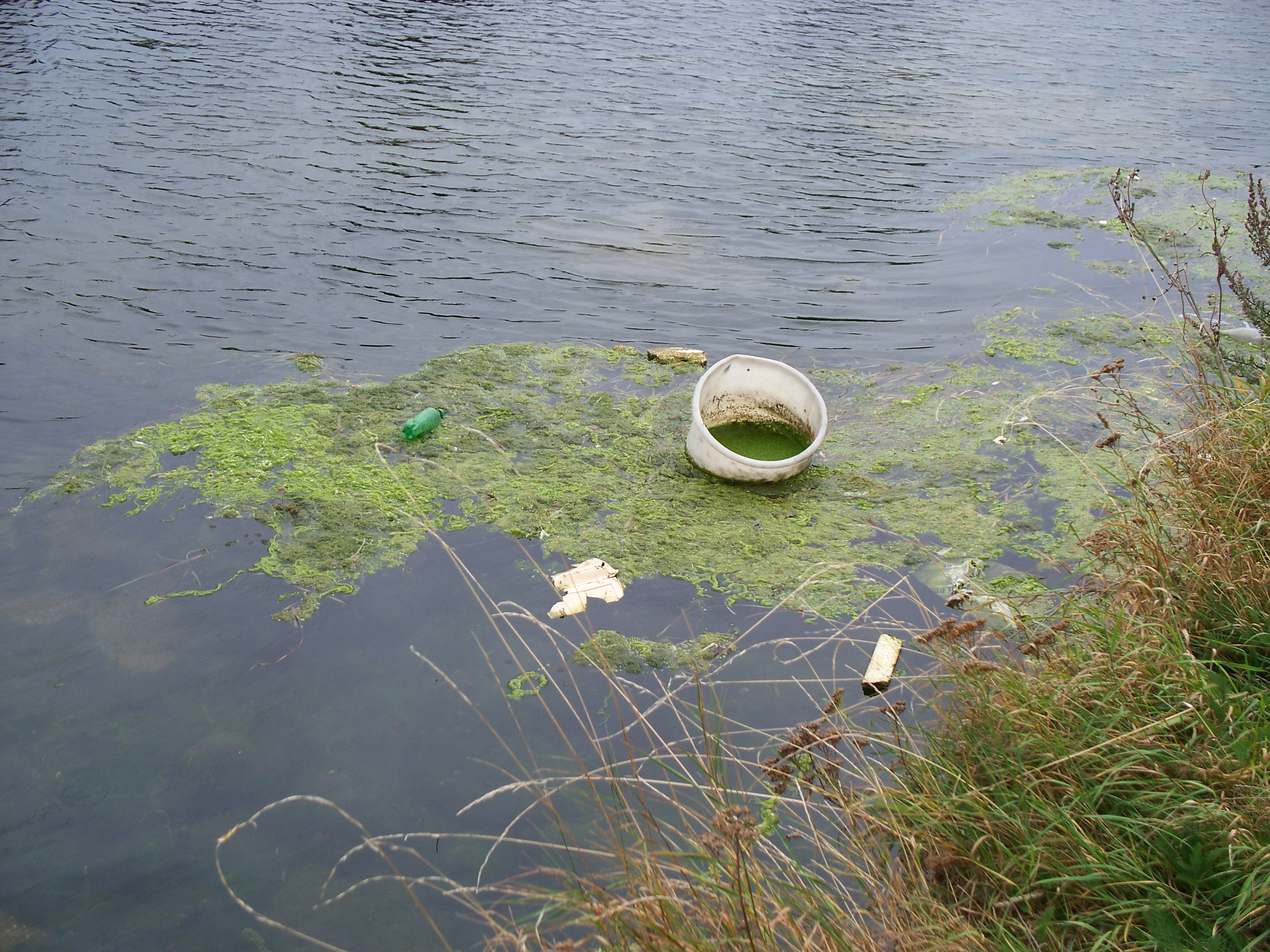 http://upload.wikimedia.org/wikipedia/commons/b/b9/Rubbish_in_Lea.jpg