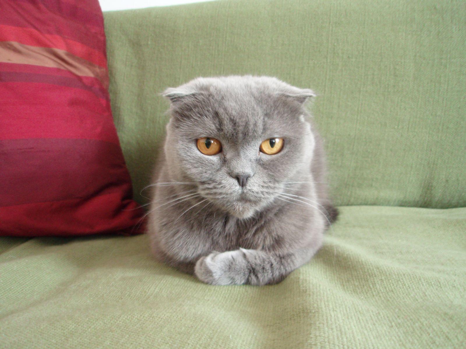 Kot W Moim Domu Rasy Kotów