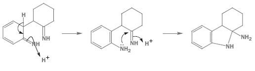 Step3 Fischer-indole.jpg
