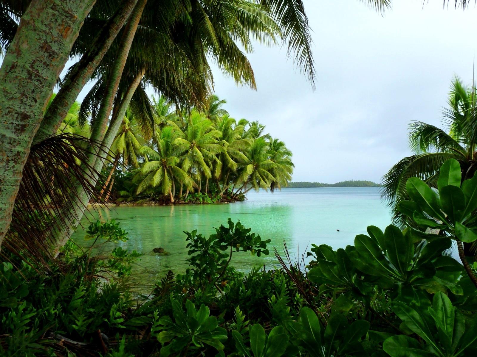 Strawn_Island_at_Palmyra_Atoll_NWR_%2851