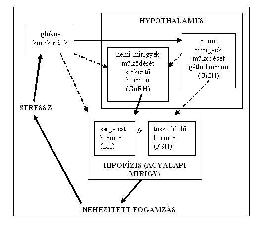 Filethe interrelationship between stress and hormone functionsg filethe interrelationship between stress and hormone functionsg ccuart Choice Image