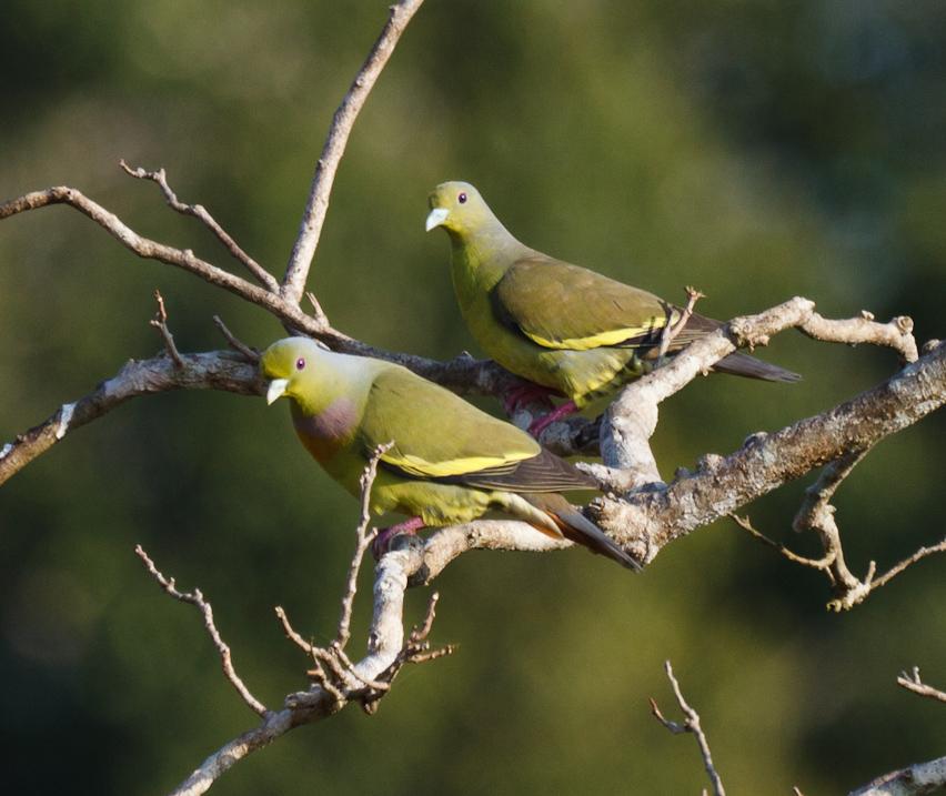Japan  Bird WatchingResources for Bird Watching by the