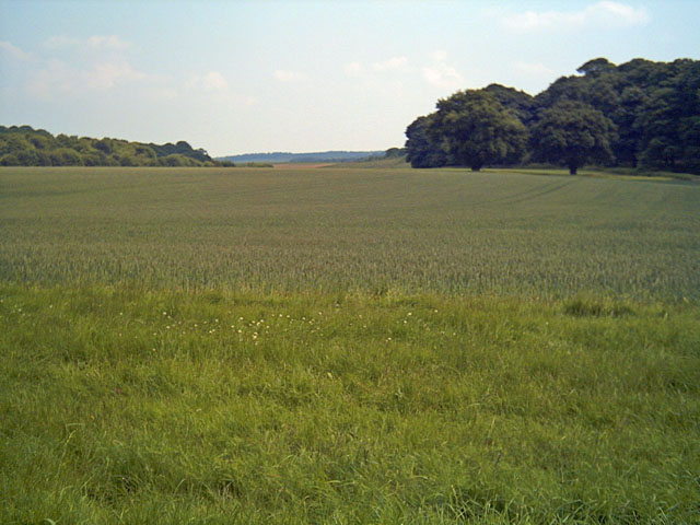 Welbeck Estate, the Dukeries - geograph.org.uk - 454074