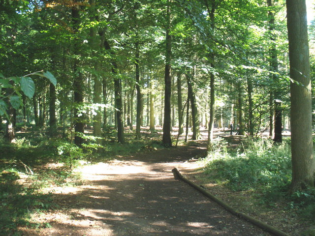 Wendover Woods - geograph.org.uk - 1440533