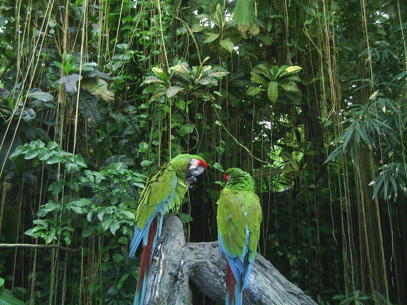 "Dosya:Zwei Papageien.JPG"" - Wikipediya Zazaki, ensiklopediya xosere"