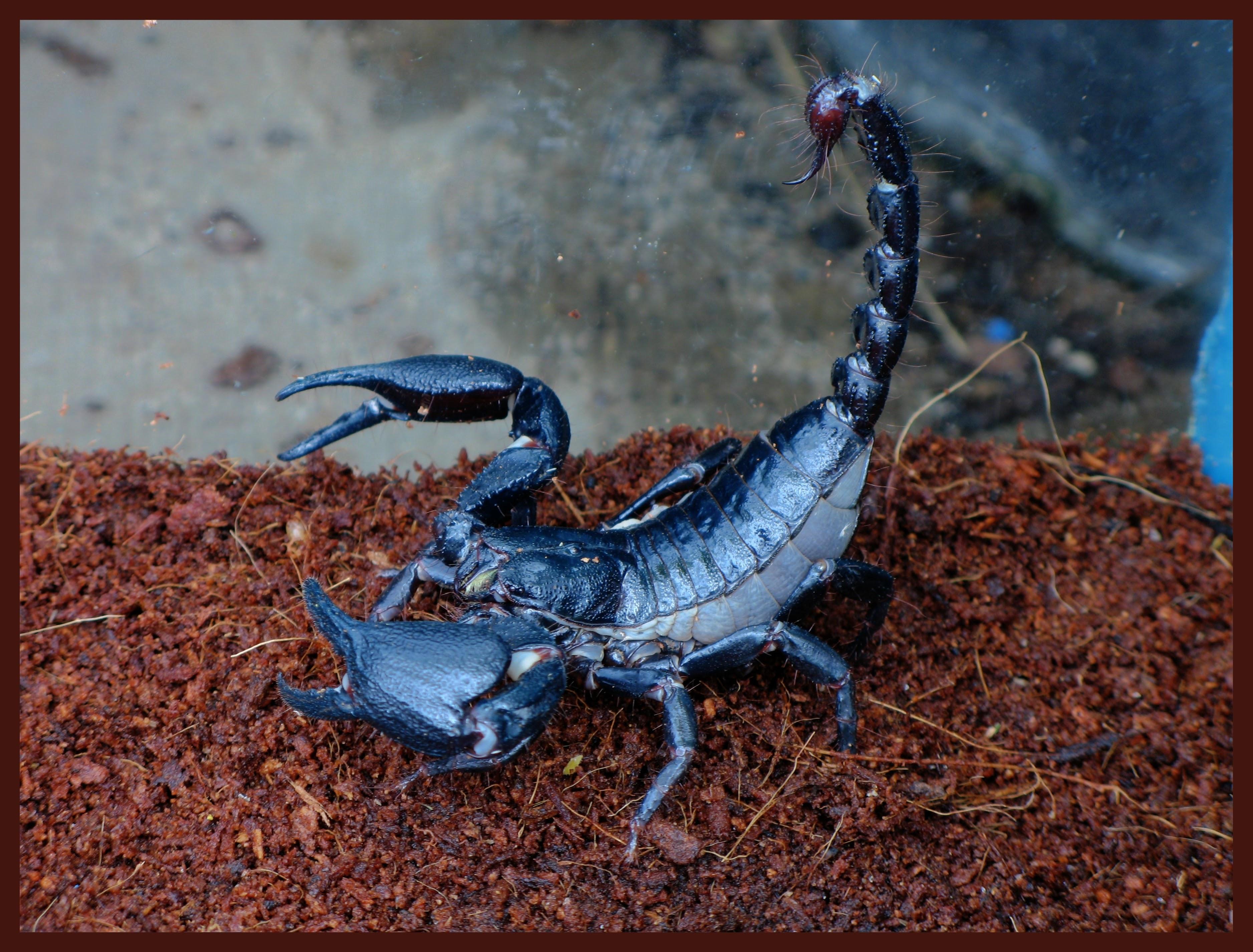 Фото картинки скорпионов
