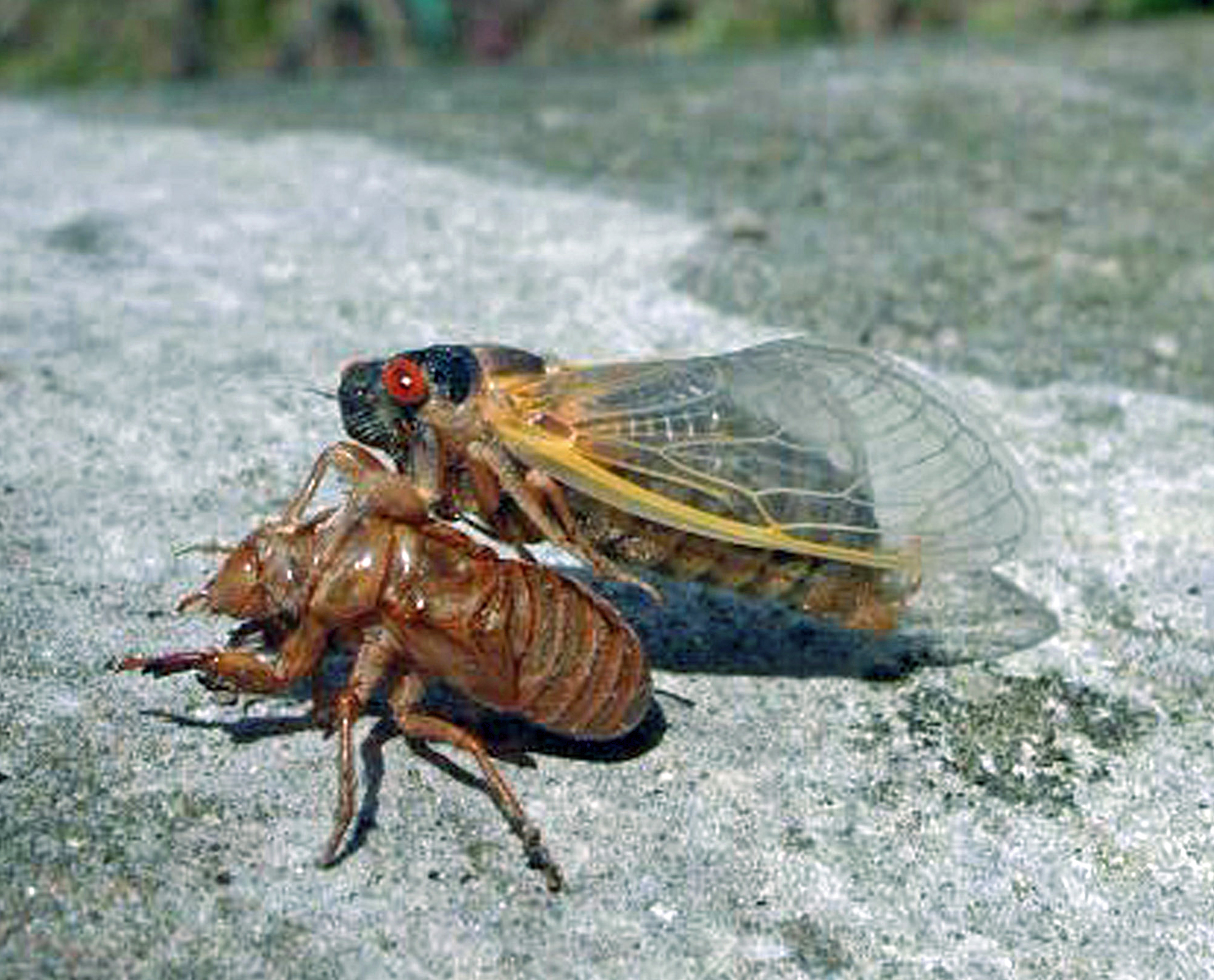 Winged Bugs In Purina Dog Food
