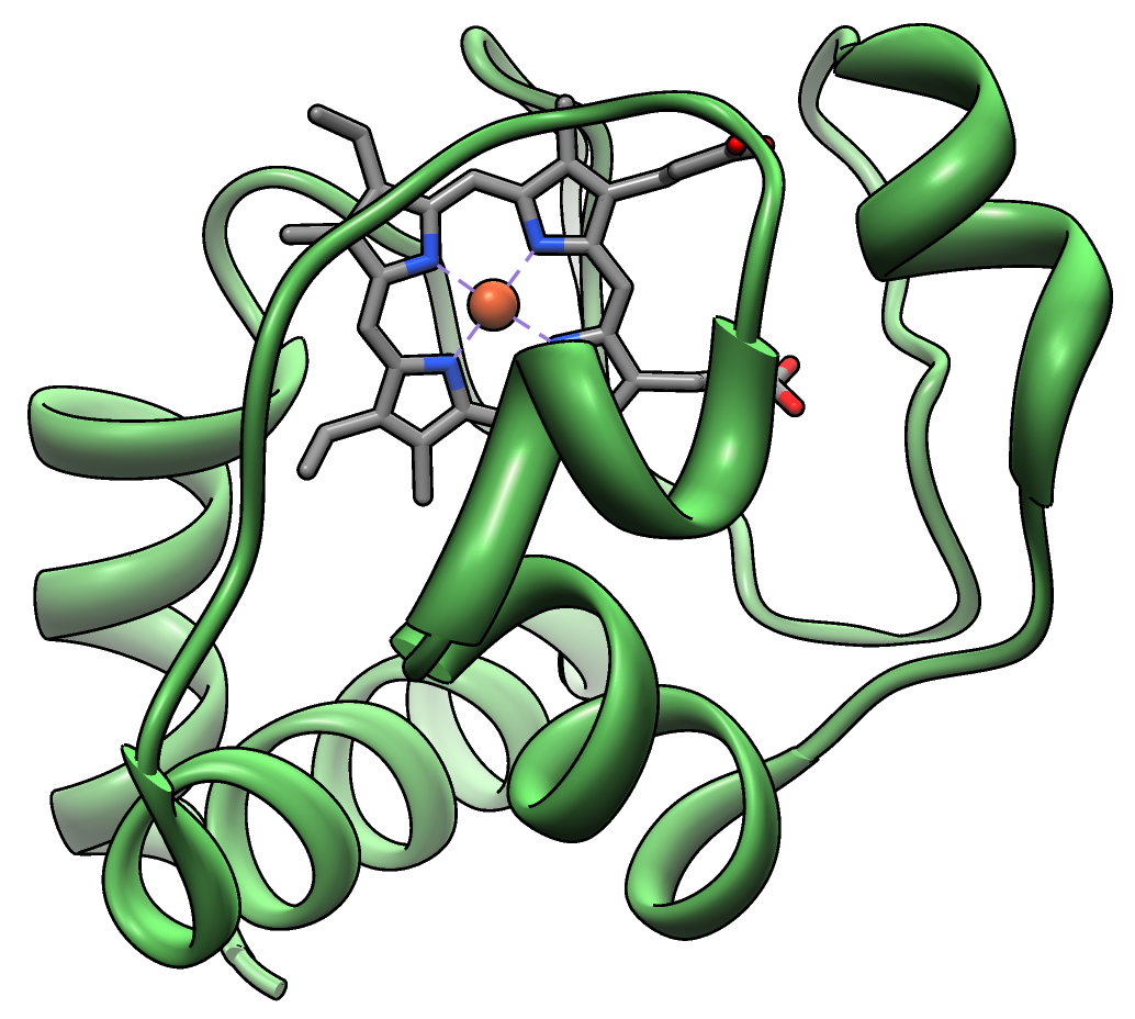Image of the Cytochrome C molecule (Vossman [CC BY-SA 3.0 (https://creativecommons.org/licenses/by-sa/3.0)])