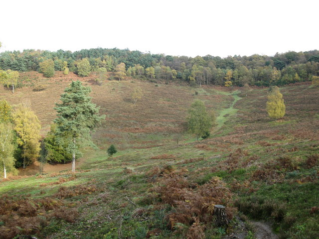Devil's Punch Bowl, Hindhead Common - geograph.org.uk - 1562464