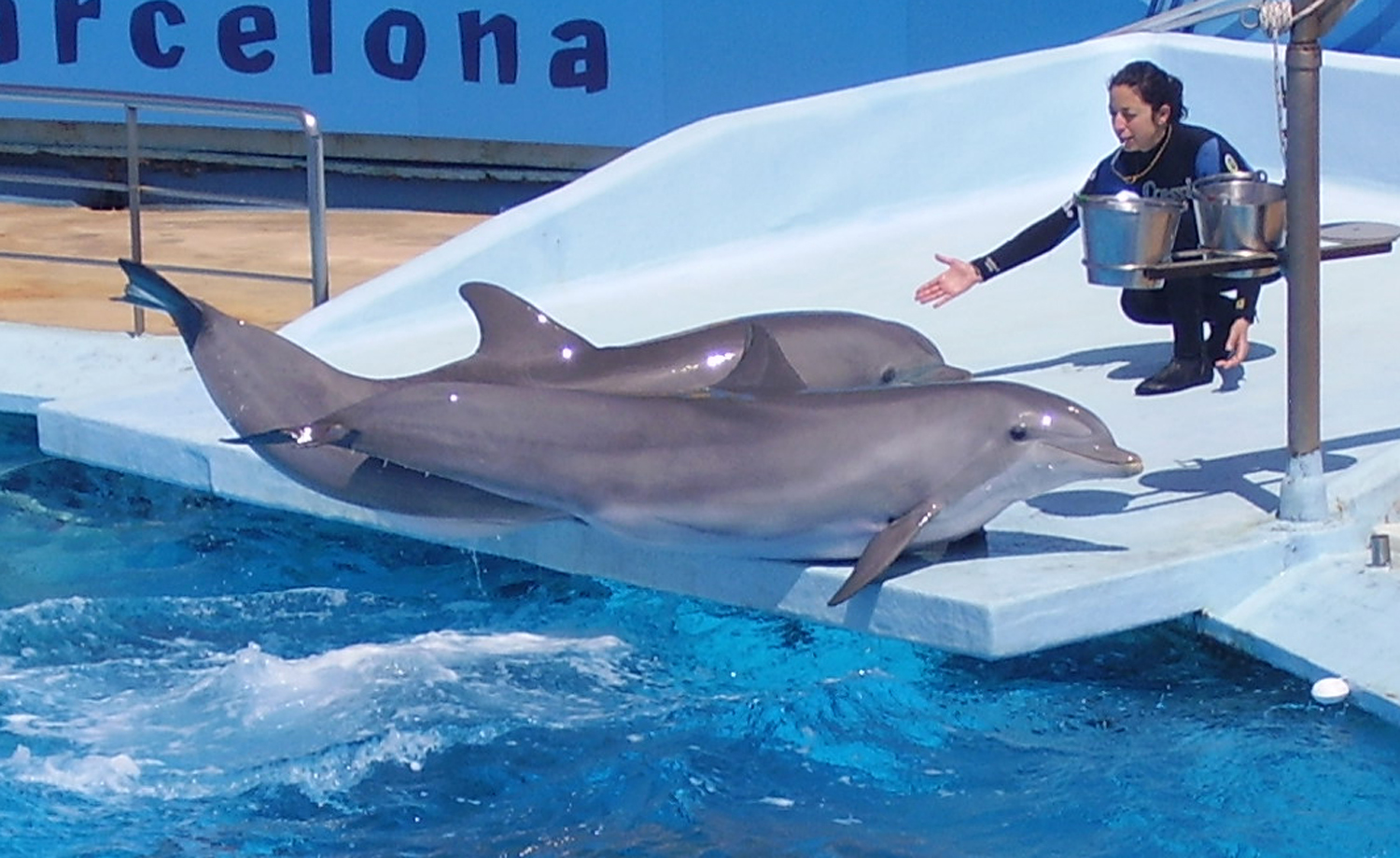 File Dolphin And Trainer 1 Jpg Wikimedia Commons
