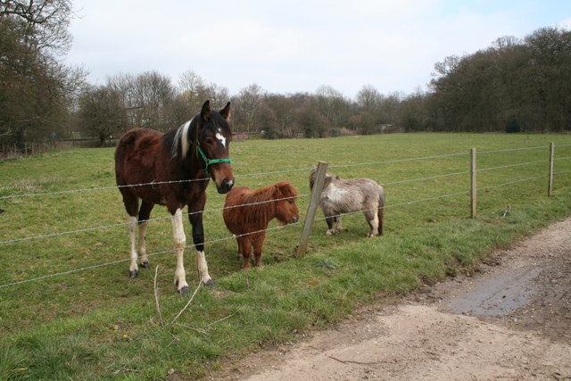 File:Horse and miniature horses, Old Basing, Hampshire - geograph.org ...
