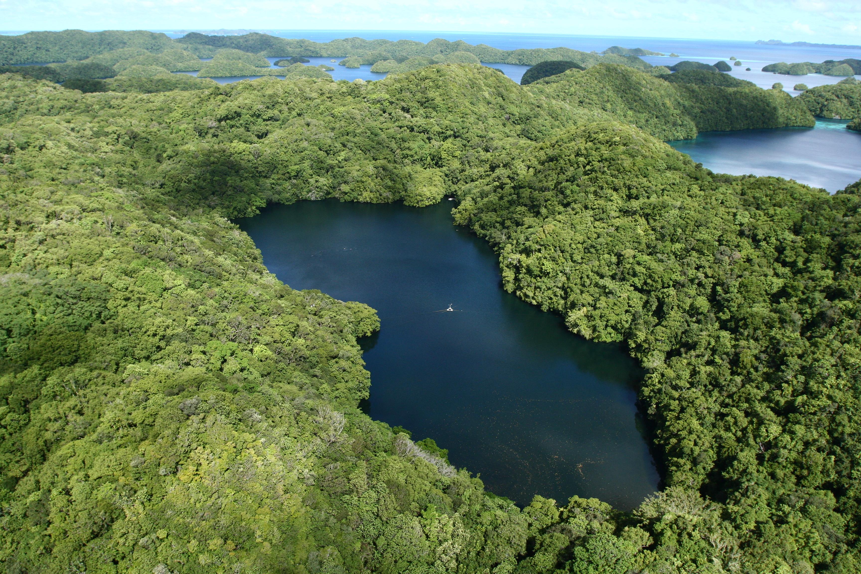 Jellyfish Lake - Wikipedia