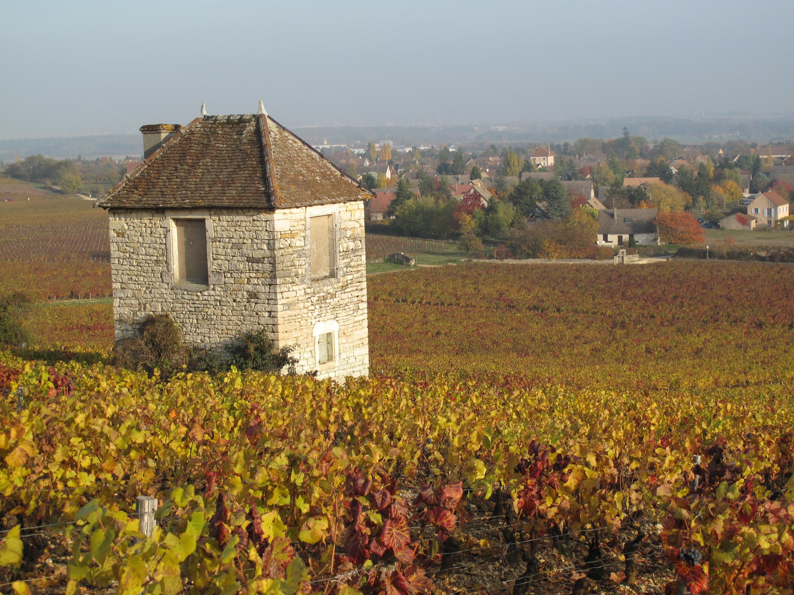 File:Les vignes de Givry le 31-10-2009 - panoramio.jpg - Wikimedia ...