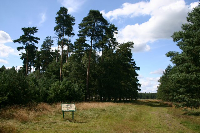Little Ouse Path, Thetford Forest - geograph.org.uk - 518140