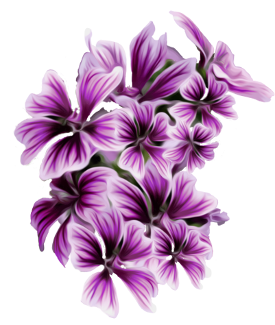 Image Result For Flowers Pages To