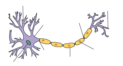 [Image: Neuron-no_labels.png]